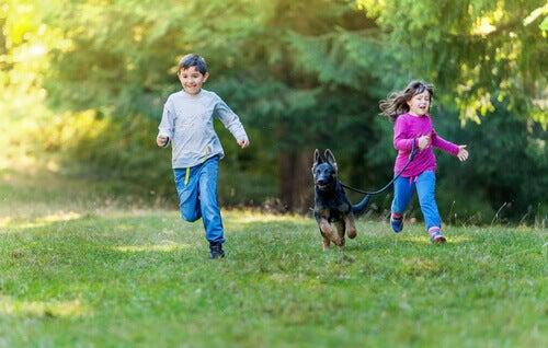 Kinderen rennen met Duitse herder