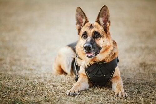 Het namenspel: namen voor politiehonden