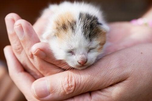 Wat moet je doen als je pasgeboren kittens op straat vindt?