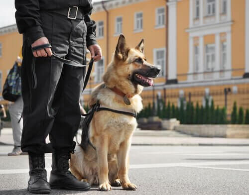 Politiehond naast agent