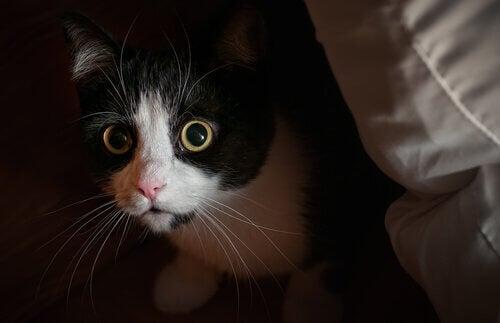 Kat die naar zijn baasje staart