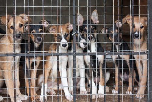 Honden in dierenasiel