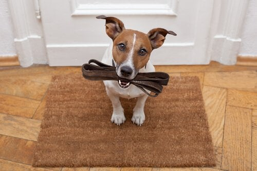 Hond die de riem vasthoudt