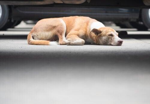 Hond die in een garage slaapt