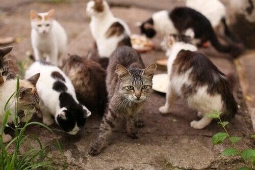 Veel straatkatten bij elkaar