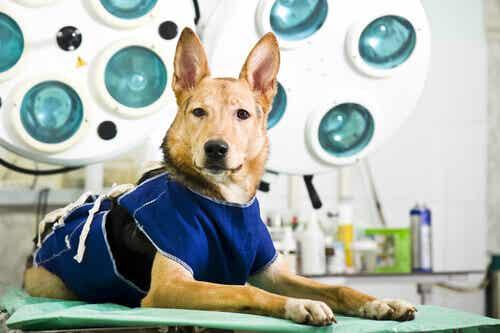Anesthesie voor huisdieren, in principe zijn er twee soorten