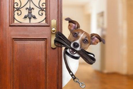 Hond met een riem in zijn bek voor de deur