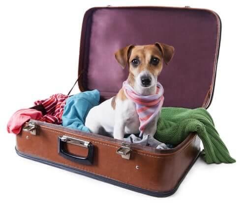 Hondje zit in een bruine koffer