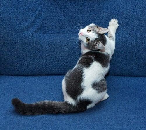 Kat krabt aan de bank