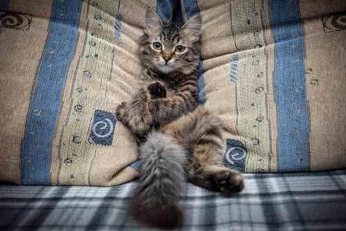 Hoe je kan voorkomen dat je kat op de bank komt