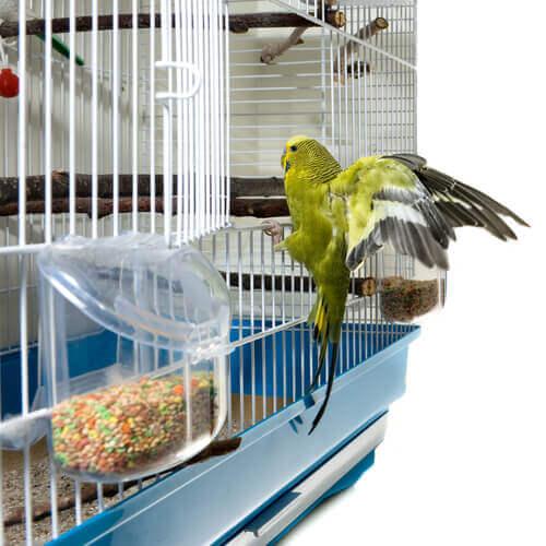 Vogel klimt omhoog langs zijn kooi