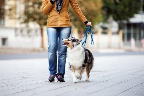 Vrouw die haar hond uitlaat