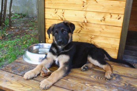 pup ligt buiten bij een hondenhok