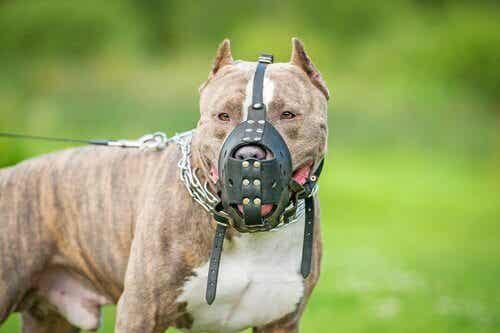 Moet je je hond laten verzekeren? Wij vinden van wel.