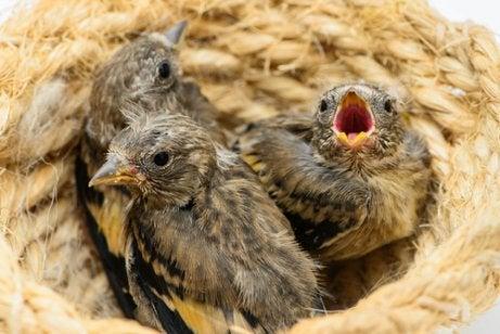 Vogelnestje met jonge vogeltjes