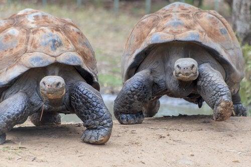 De wilde dieren van de Galapagoseilanden