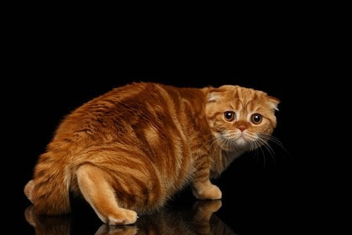 kat sluipt angstig weg