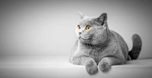 De lichaamstaal van een kat