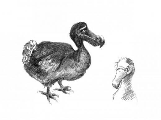 Tekening van een dodo