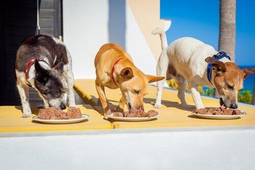 Drie honden die staan te eten