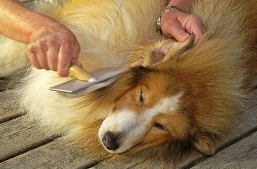 De vacht van een hond kammen