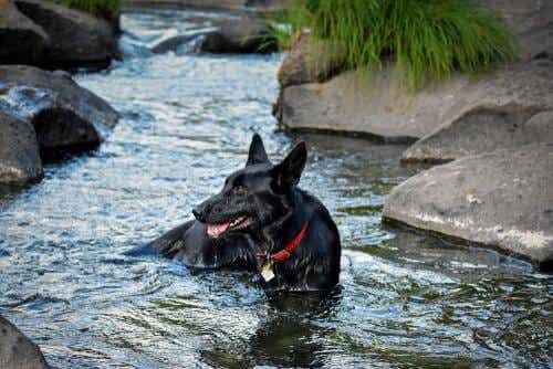 Kan ik mijn hond in de rivier laten spelen?