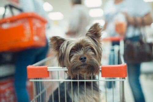 Kun je je huisdier meenemen tijdens het winkelen?