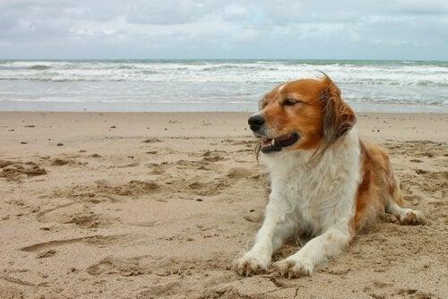 hond vies van het zand