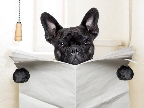 hond leest de krant op het toilet