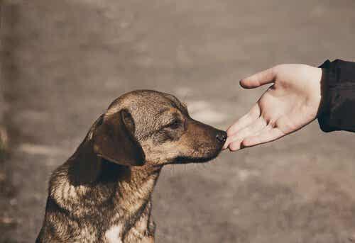 Hoe benader je een vreemde hond het beste?
