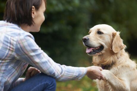 Hond geeft een vrouw een poot