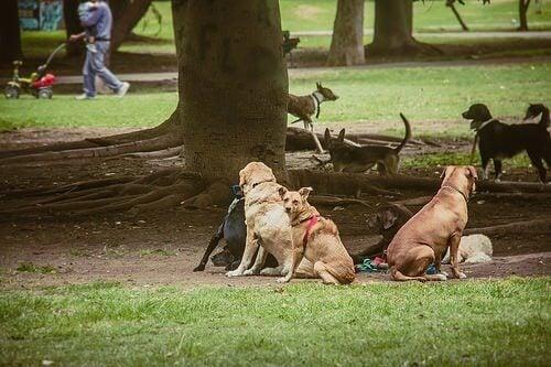 meerdere honden samen in het park