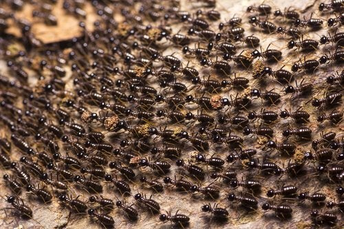 Een leger mieren