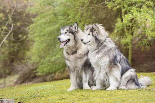 Een mannetjes- of een vrouwtjeshond: hoe te kiezen?
