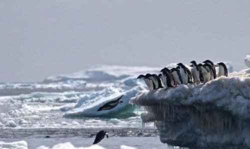 Het pinguïnkerkhof op Antarctica