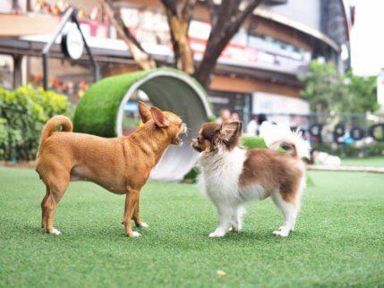 honden op een speelveld