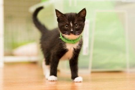 Voor de verzorging van een kitten is zoals gezegd geduld nodig.