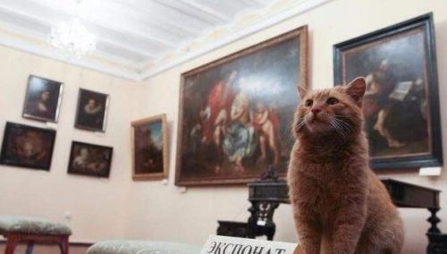 Een kat die een museumbeheerder werd