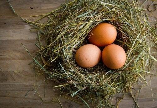 Kippeneieren in een nest