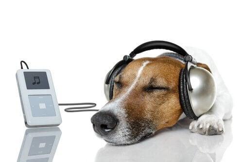 Hond die naar een iPod luistert