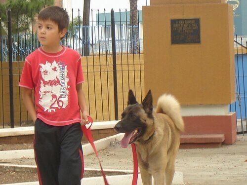 Jongen die zijn hond uitlaat