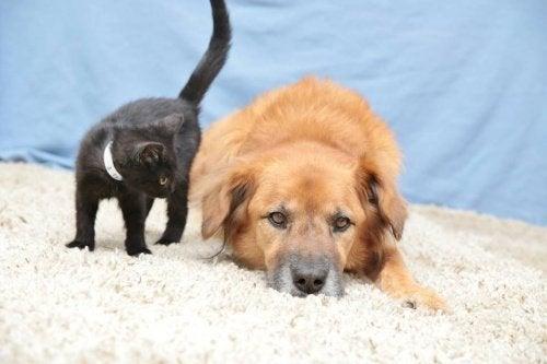 Kat en hond in het zand
