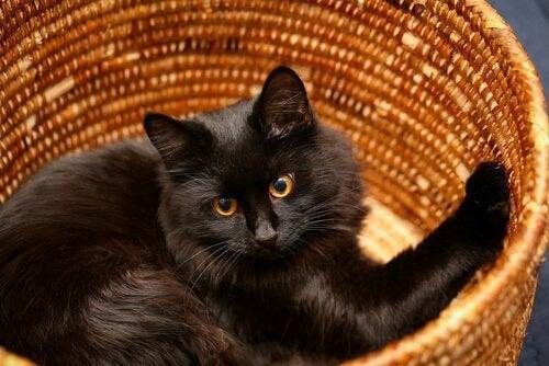 zwarte kat in een rieten mand
