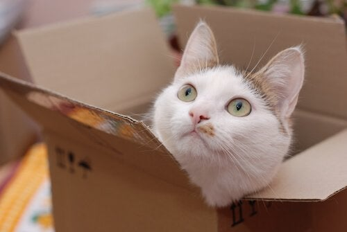 Een kat die uit een kartonnen doos gluurt