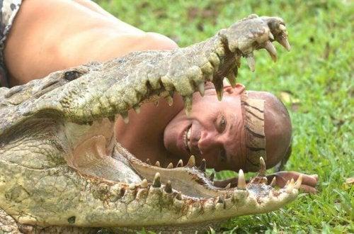 Man naast bek van krokodil