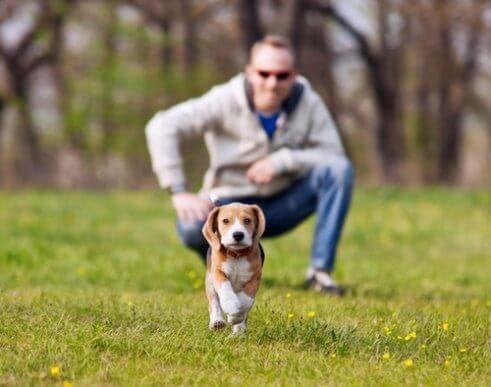 Hoe voorkom je dat je tijdens een wandeling je hond kwijtraakt?