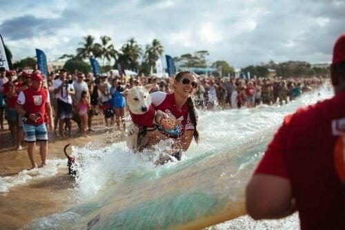 Vrouw en hond aan het surfen