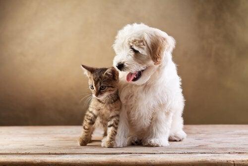 Klein poesje met een witte hond