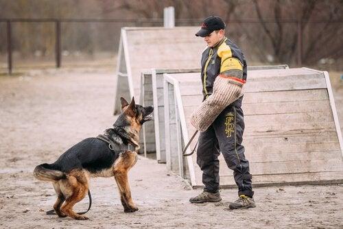 man is een Duitse herder aan het trainen