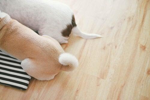 Hoe een hond met zijn staart communiceert